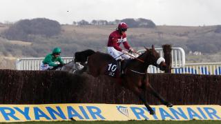 Cheltenham Festival winner Shattered Love